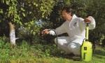 Malířský postřikovač MAROLEX Profession 12l Plus při aplikaci postřiku na rostliny