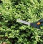 Nůžky na trávu S50 FISKARS 1000557 jsou vhodné k drobným úpravám keřů a rostlin